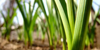 Biomassza hasznosítása tanfolyam