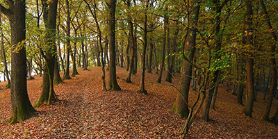Erdőgazdálkodás tanfolyam