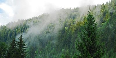 Erdőművelő tanfolyam